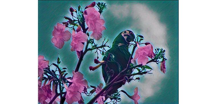 Logo Wacamaya Birding Co